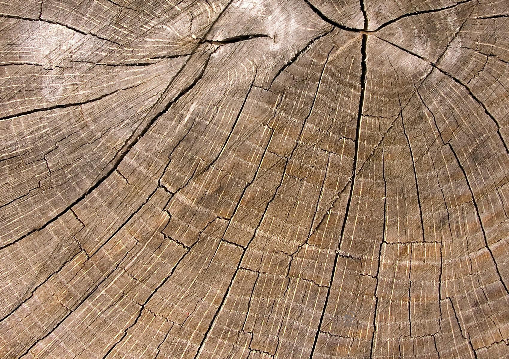legno sfondo